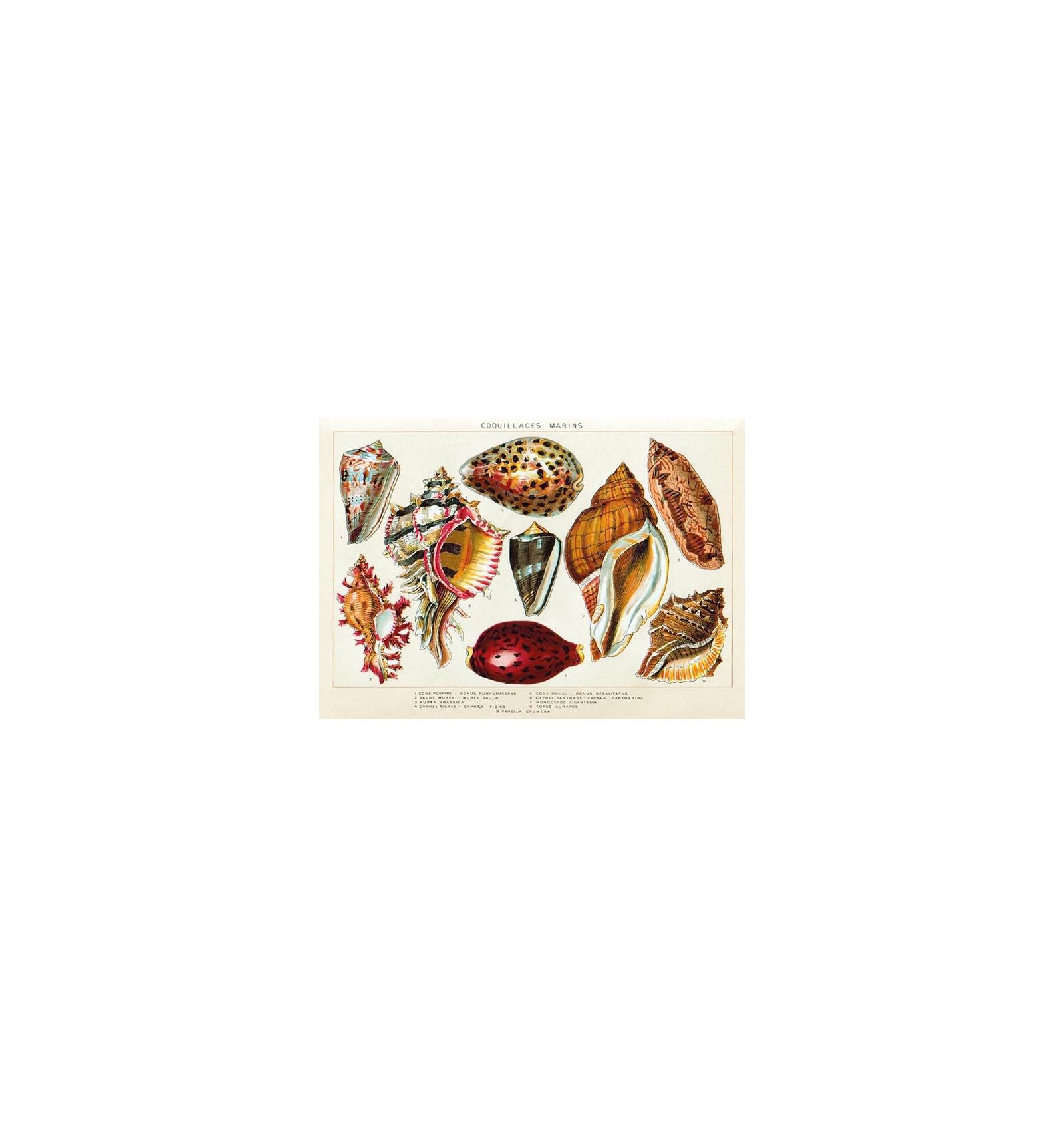 https://osez-sophie.com/173-thickbox_default/set-de-table-ile-de-re-la-rochelle-souvenir-vacances-peche-a-pied-coquillages-maree-basse.jpg