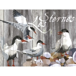 Set de Table collection oiseau Les Sternes