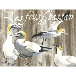 Set de Table collection oiseau Les Fous de Bassan