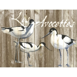 Set de Table collection oiseau Les Avocettes