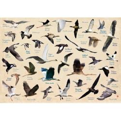 Set de table Oiseaux de l'Île de Ré - Création française - Fabriqué en Europe